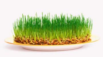 Масло зародышей пшеницы в косметологии
